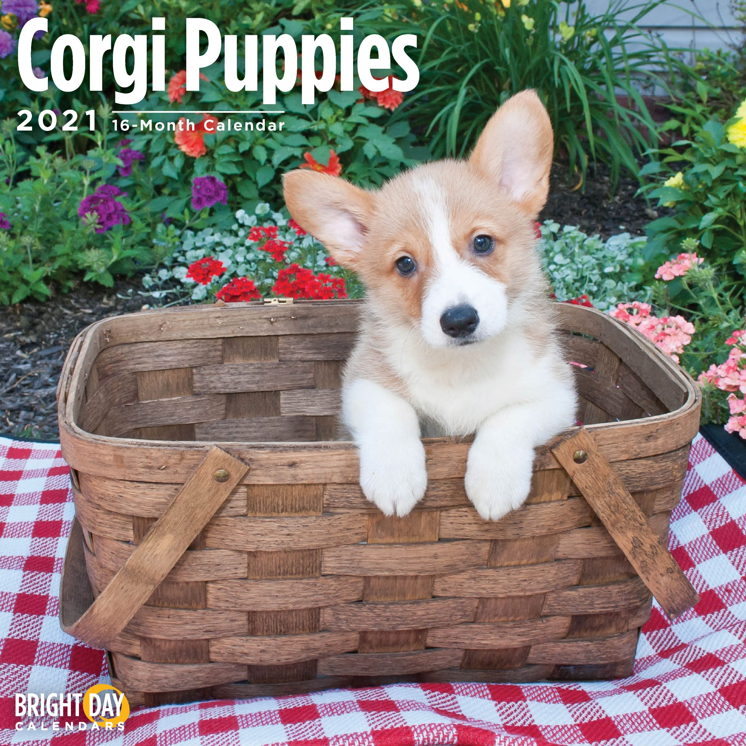 2021 Corgi Puppies Wall Calendar