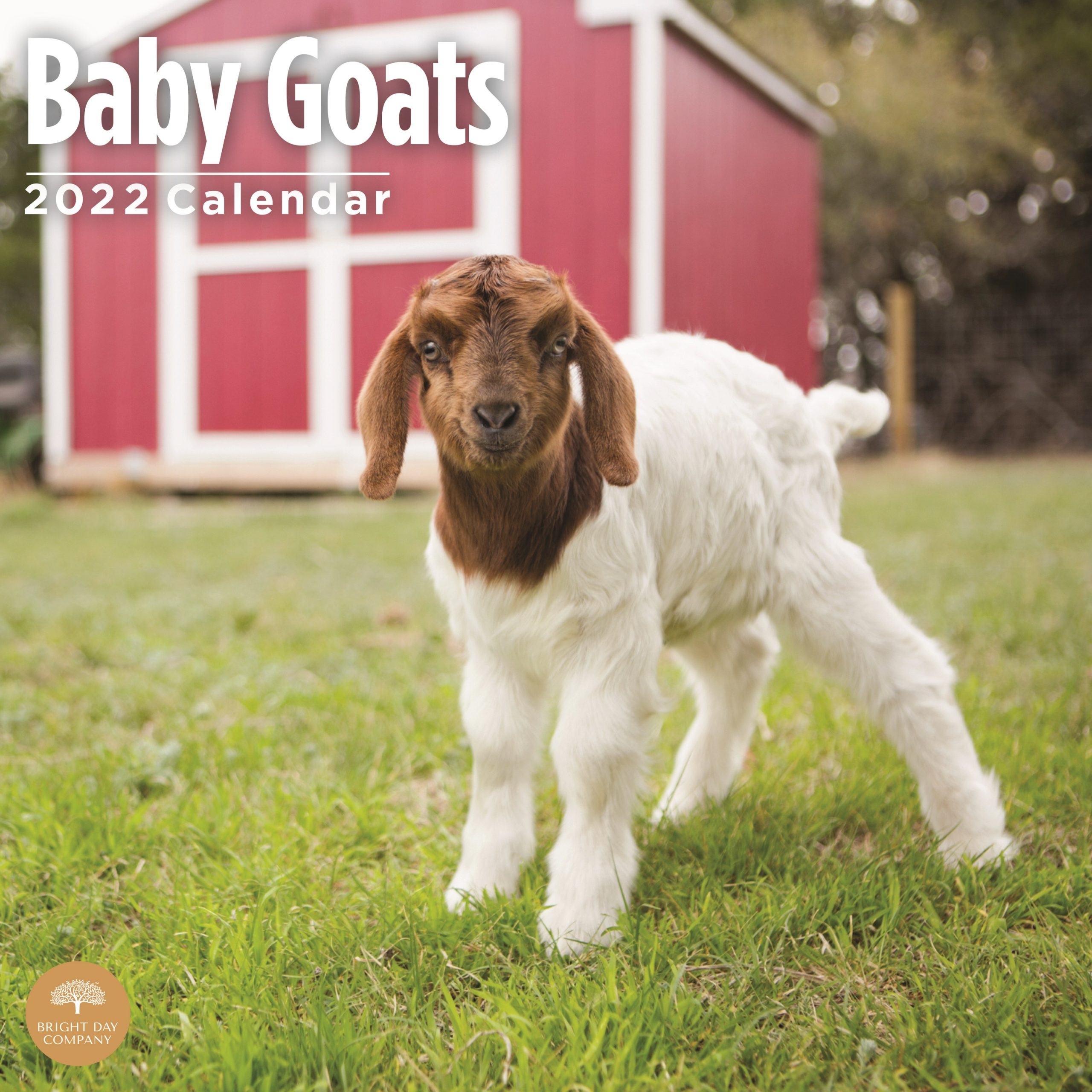 2022 Baby Goats Wall Calendar by Bright Day, 12 x 12 Inch